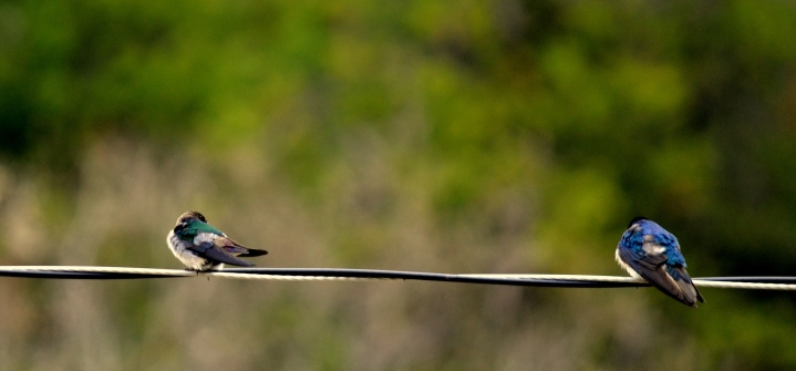 Bird on a wire. Taken in Yukon.