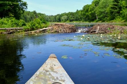 Beaver dam lift over