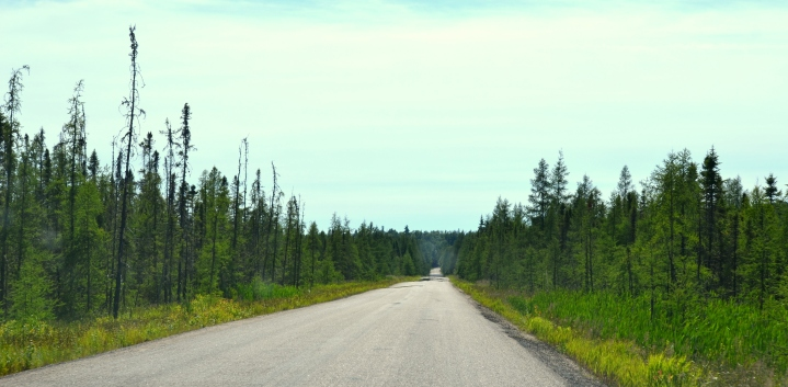 Black spruce and bog country.