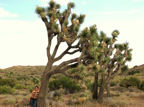 Shanna & Joshua Trees
