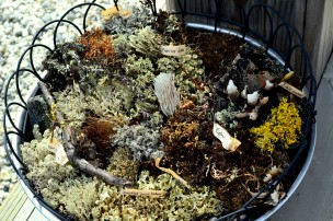 Lichen and moss of the tundra