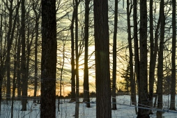 March in the Sugar Bush