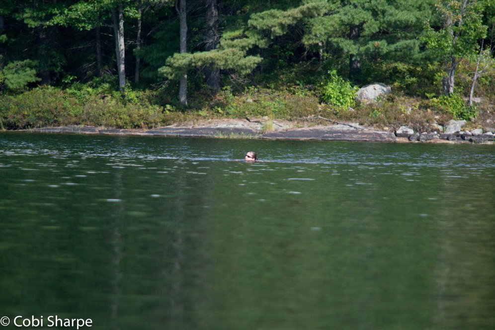S swimming across the lake a couple of hours after the bear encounter