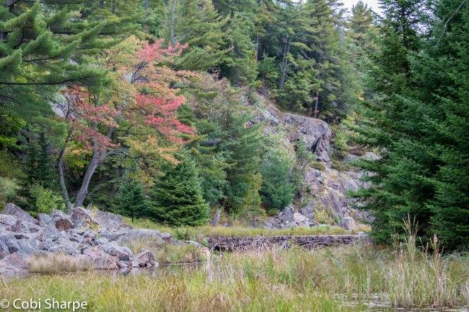 Beaver dam liftovers on Kakakise Creek
