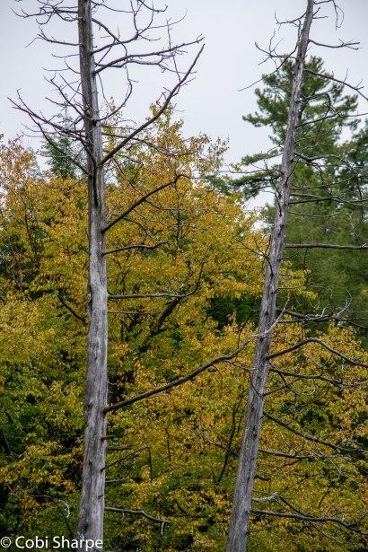 Fall happening