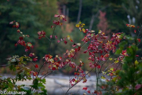 Fall happening on Killarney Lake
