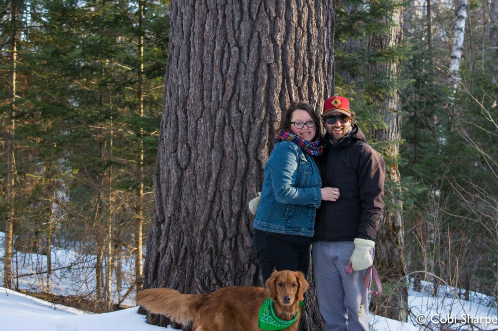 The old-growth white pine where my husband proposed to me in December 2010
