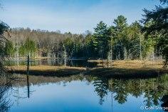 Ooze Lake