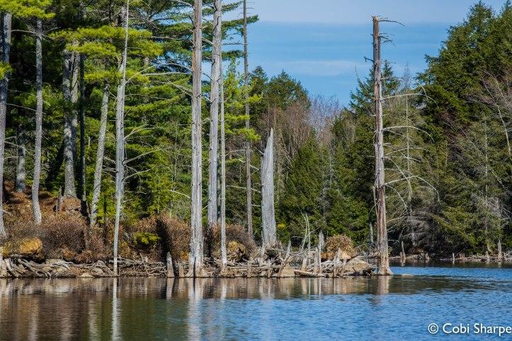 Quirt Lake