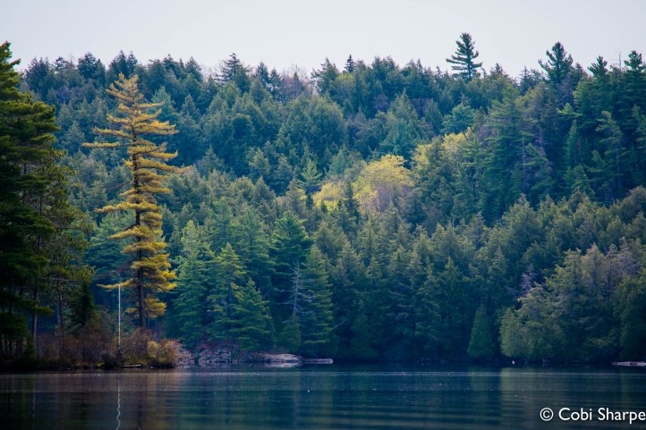 Cache Lake, Algonquin Park