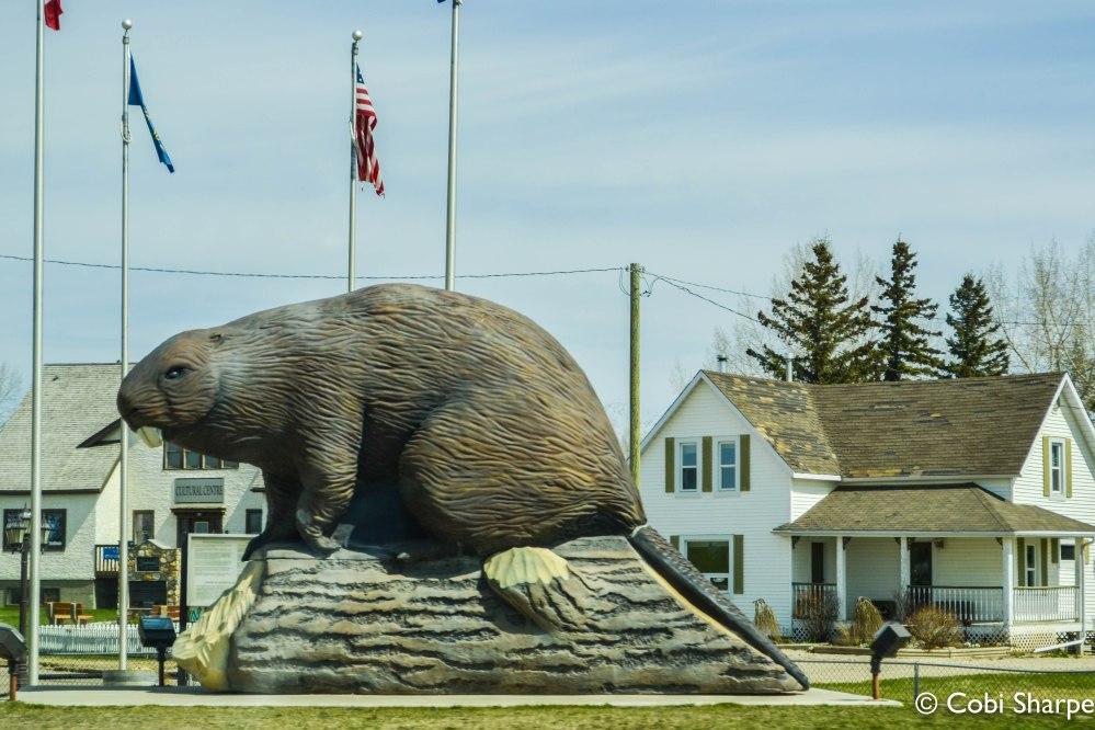 Canada's biggest Beaver?