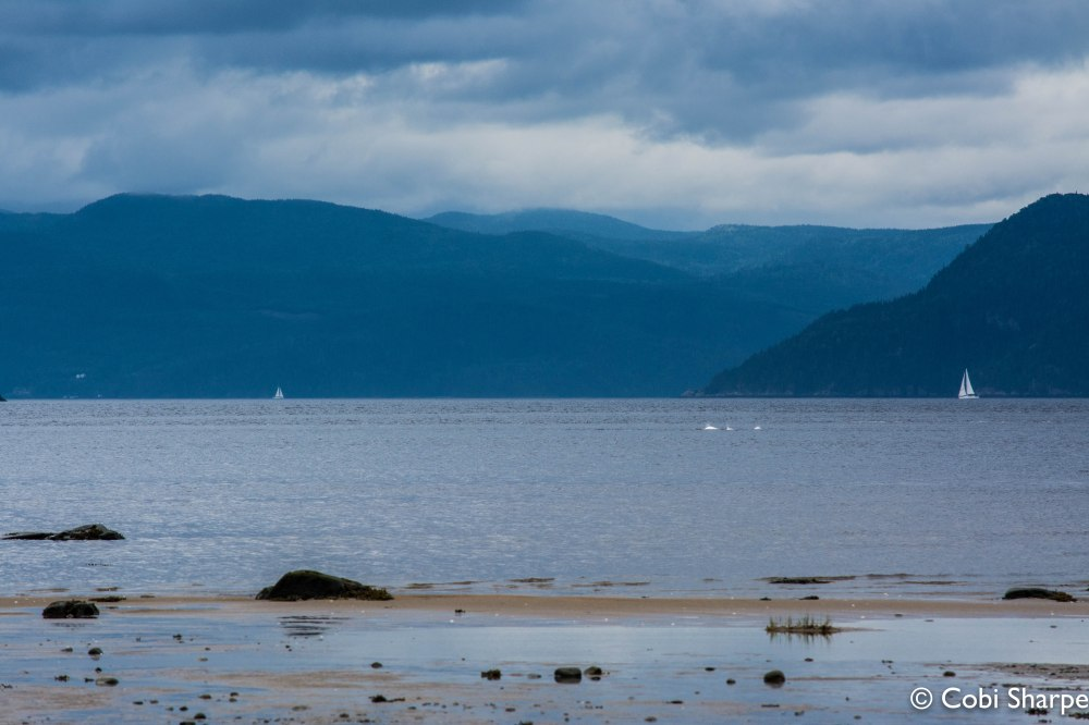 Watching beluga whales from our campsite at Fjord-du-Saguenay, Quebec.