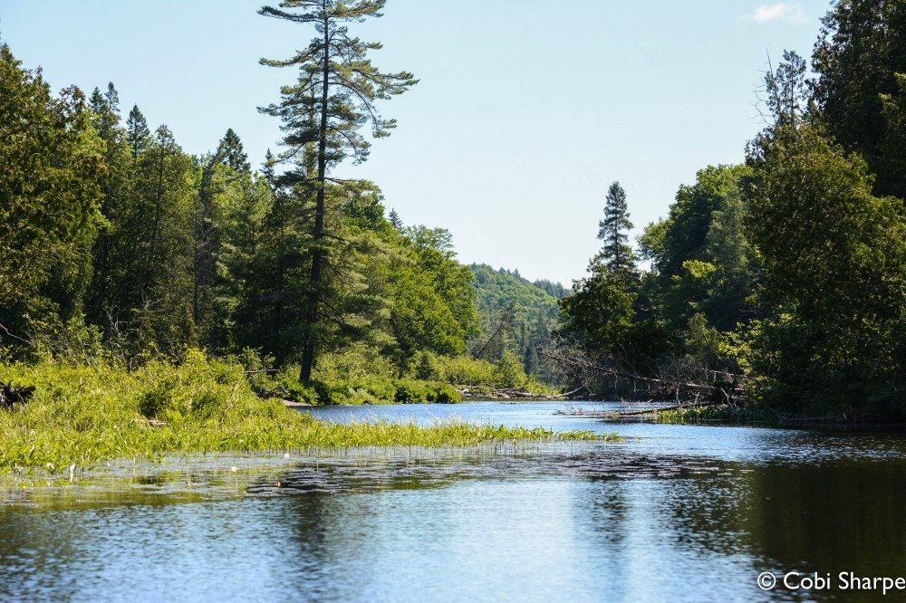 Paddling the Petawawa River