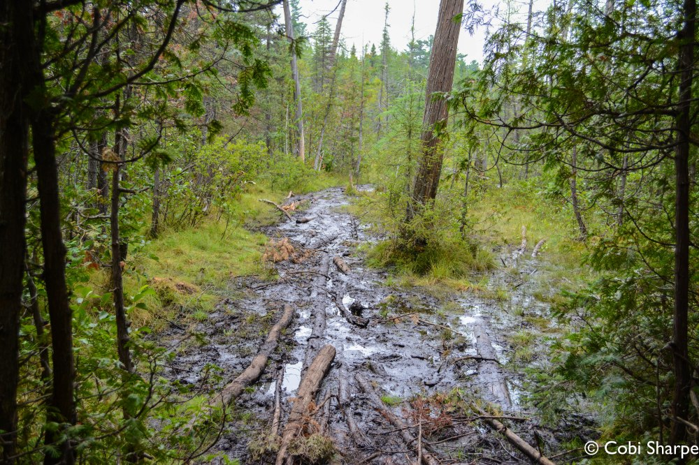 """""""Very muddy"""" section of the McConnell Bay to Laura Lake portage"""