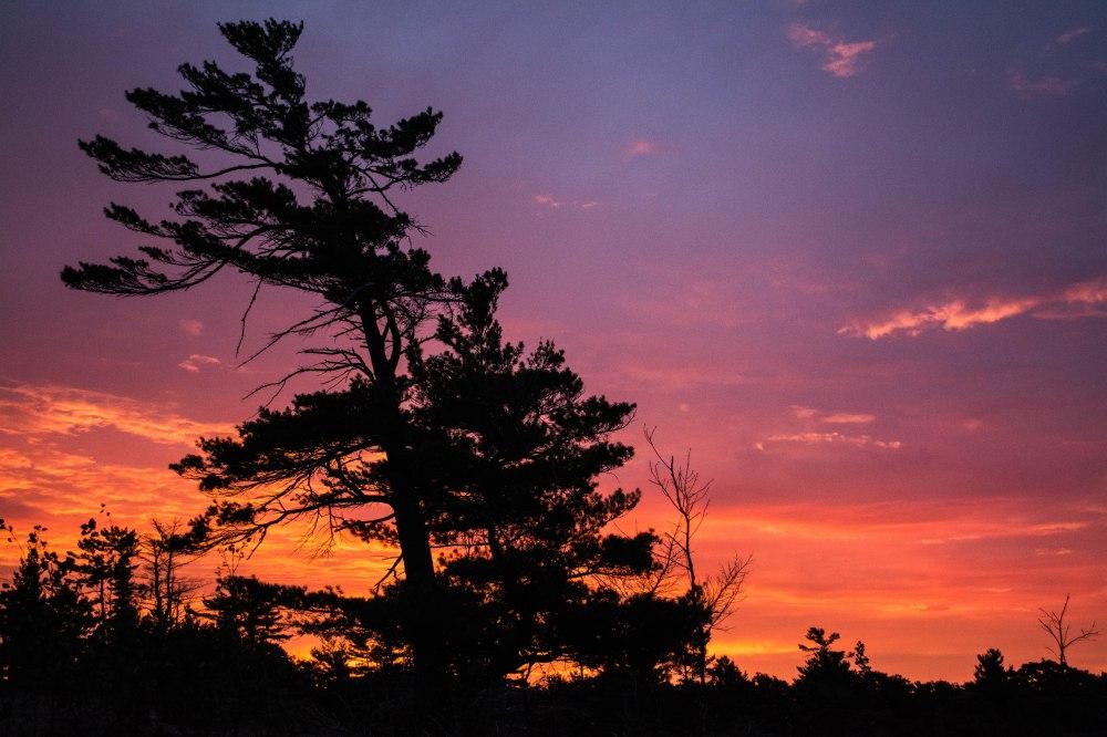 My perfect tree at sunrise