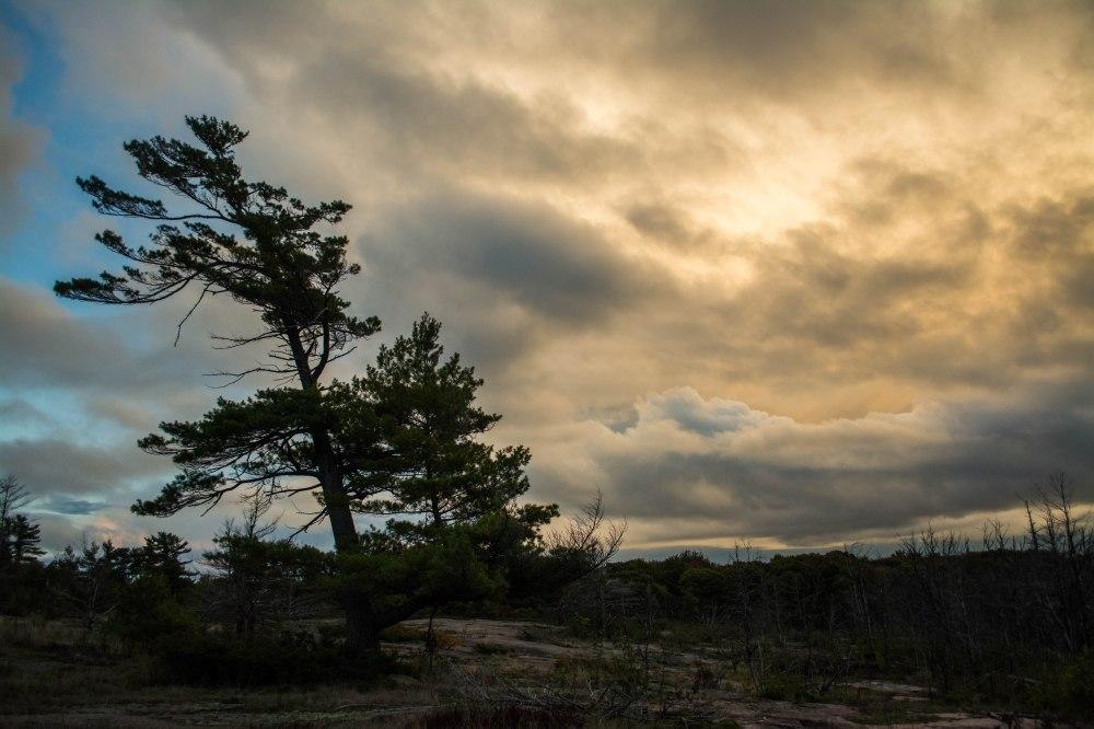 My perfect tree sunset shot